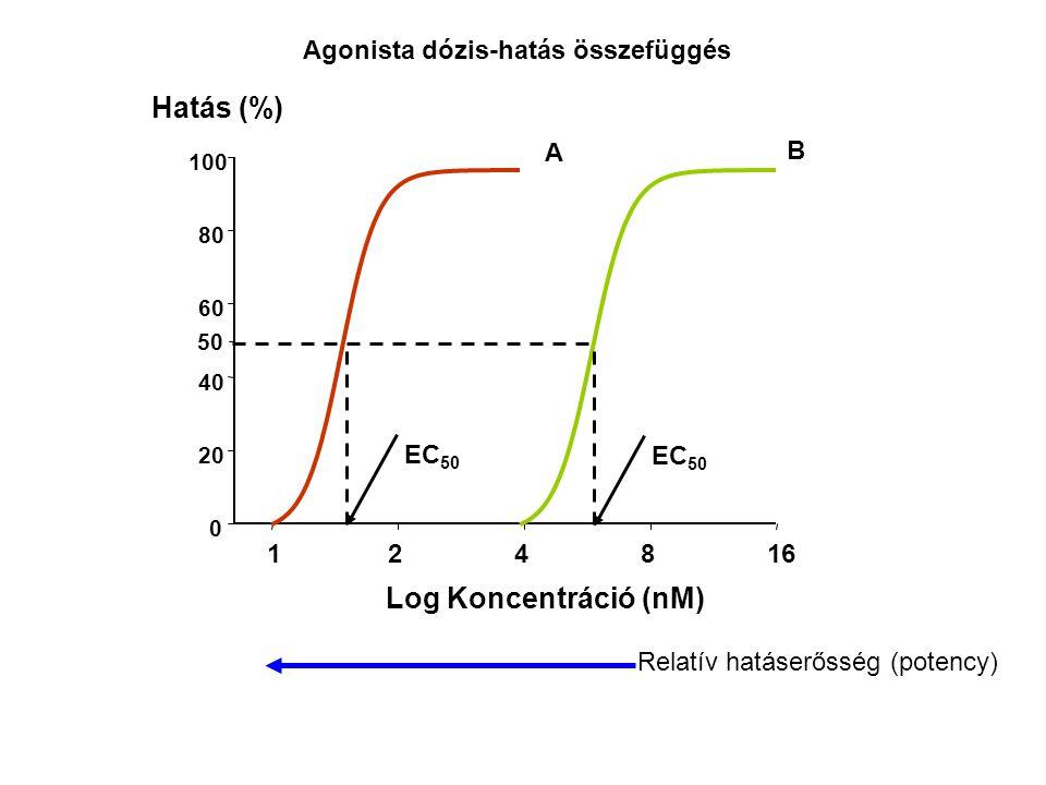 Hatás (%) Log Koncentráció (nM) Agonista dózis-hatás összefüggés A B