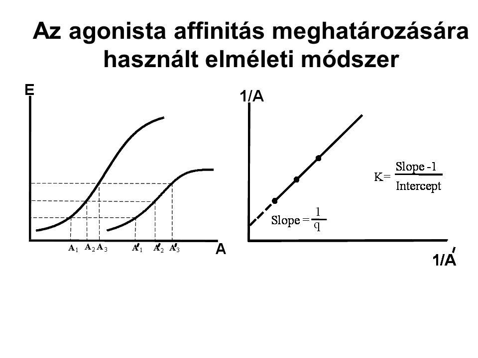 Az agonista affinitás meghatározására használt elméleti módszer