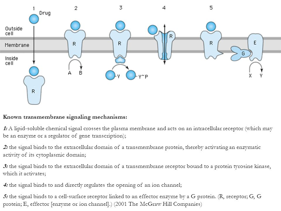 Known transmembrane signaling mechanisms: