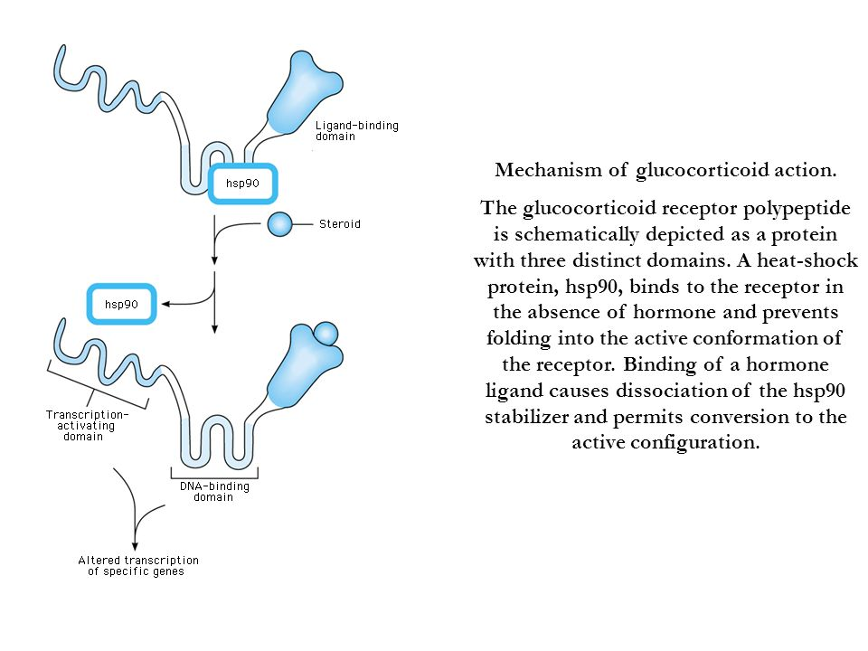 Mechanism of glucocorticoid action.