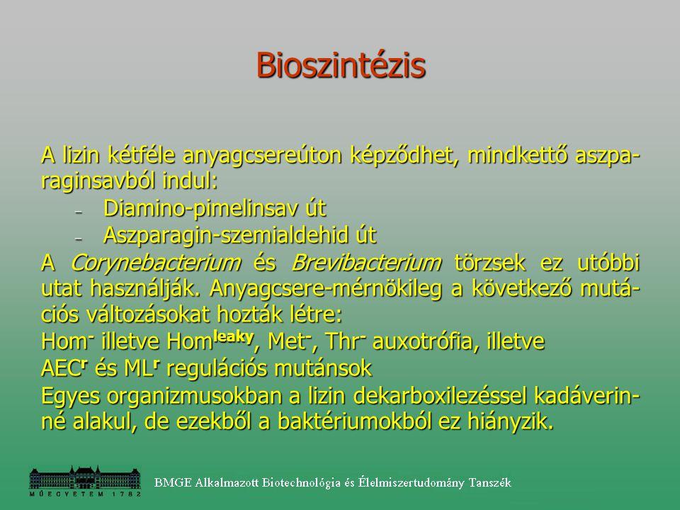 Bioszintézis A lizin kétféle anyagcsereúton képződhet, mindkettő aszpa-raginsavból indul: Diamino-pimelinsav út.