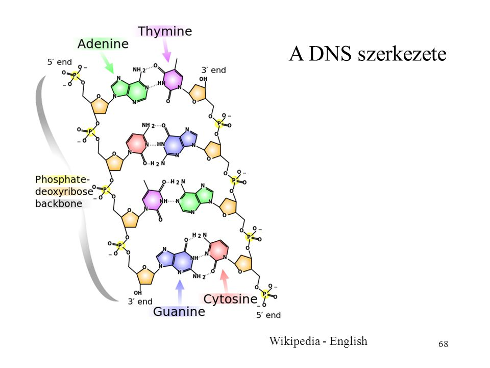 A DNS szerkezete Wikipedia - English