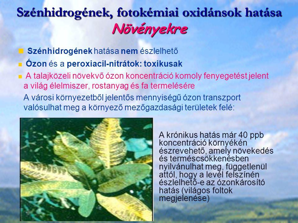 Szénhidrogének, fotokémiai oxidánsok hatása Növényekre