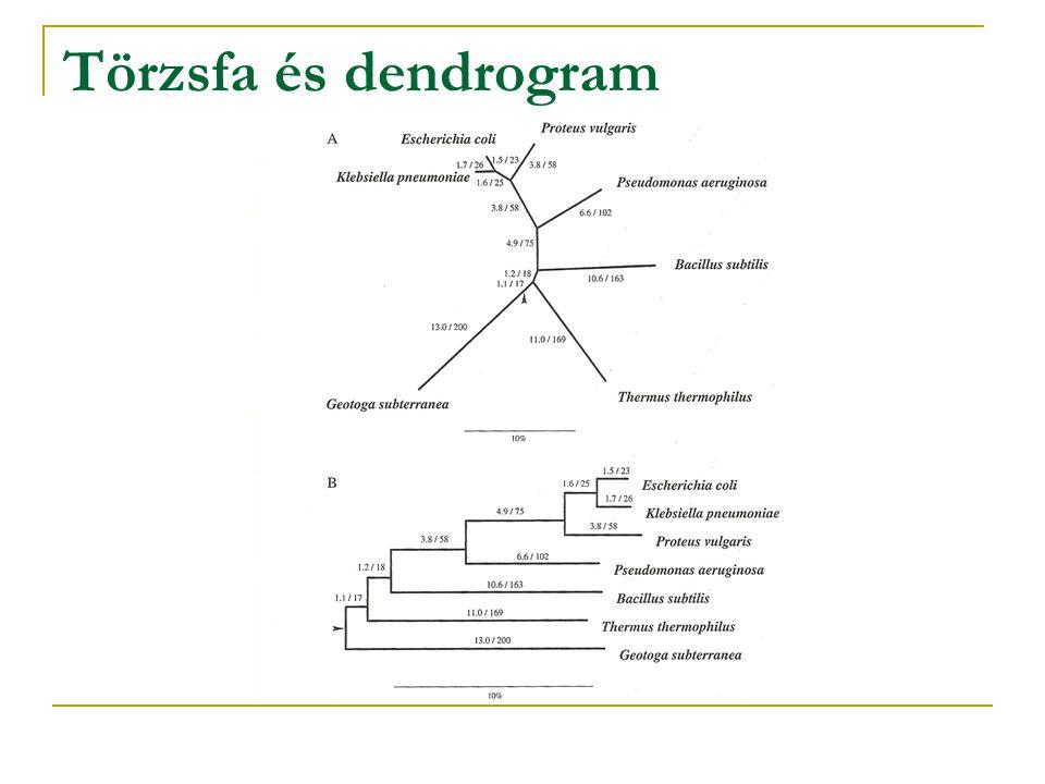 Törzsfa és dendrogram