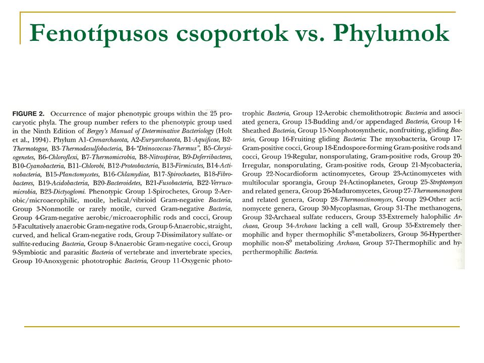 Fenotípusos csoportok vs. Phylumok