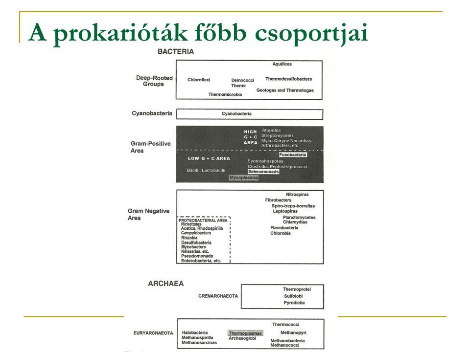 A prokarióták főbb csoportjai
