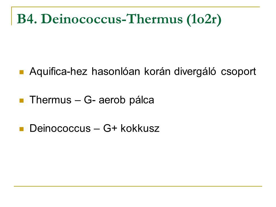 B4. Deinococcus-Thermus (1o2r)