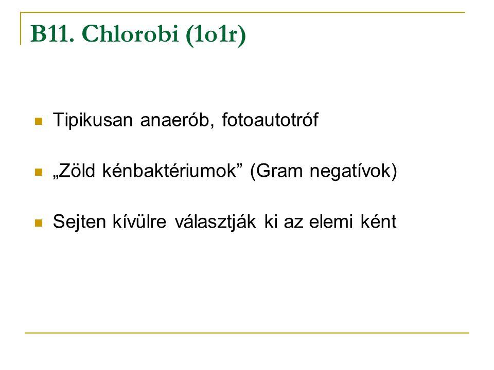 B11. Chlorobi (1o1r) Tipikusan anaerób, fotoautotróf