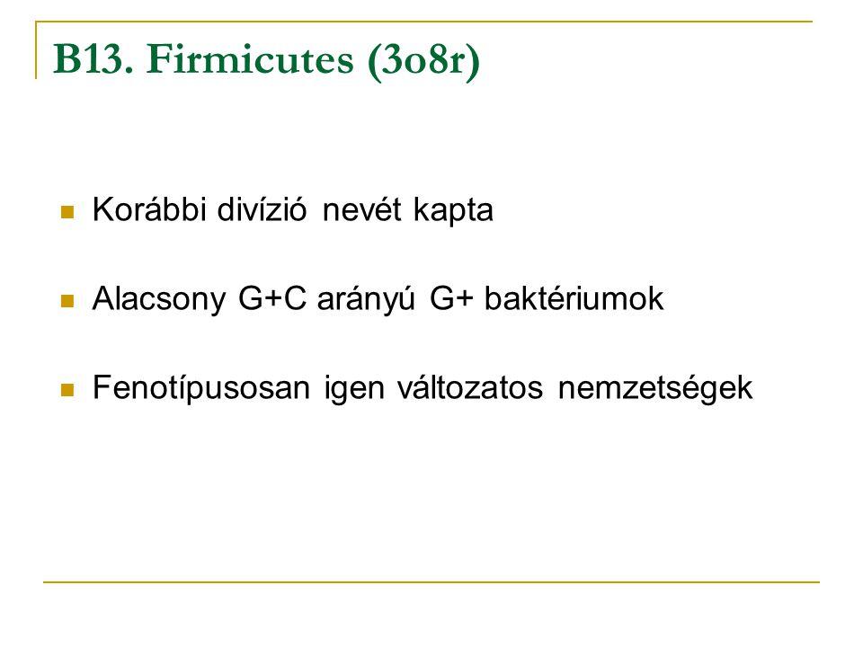 B13. Firmicutes (3o8r) Korábbi divízió nevét kapta