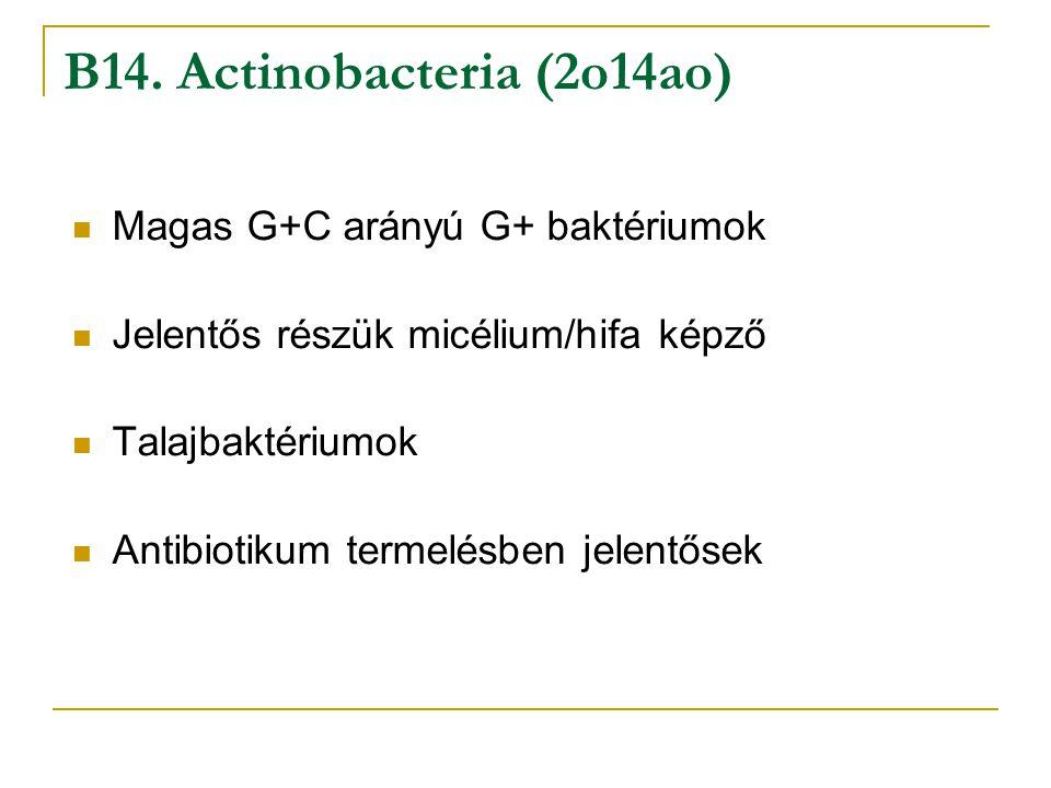 B14. Actinobacteria (2o14ao)