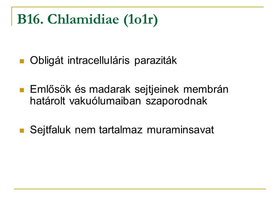 B16. Chlamidiae (1o1r) Obligát intracelluláris paraziták