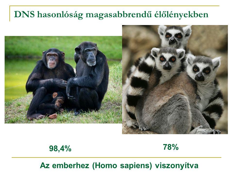 DNS hasonlóság magasabbrendű élőlényekben