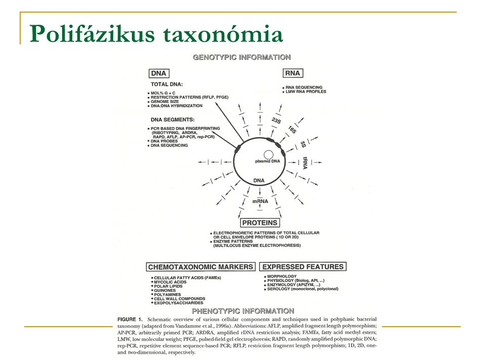 Polifázikus taxonómia