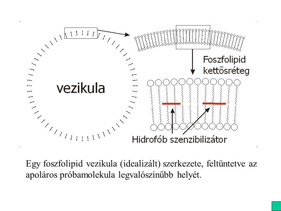 Egy foszfolipid vezikula (idealizált) szerkezete, feltüntetve az