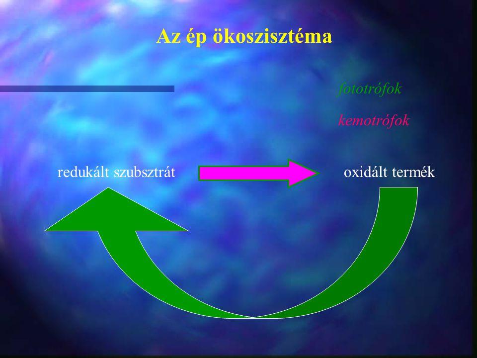 redukált szubsztrát oxidált termék