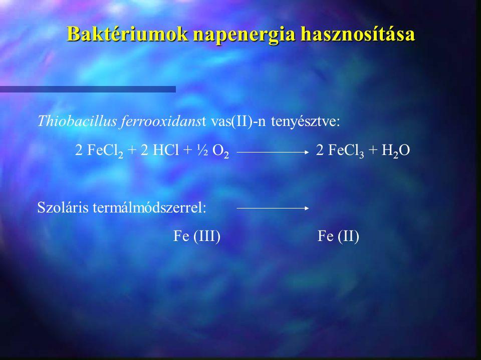 Baktériumok napenergia hasznosítása