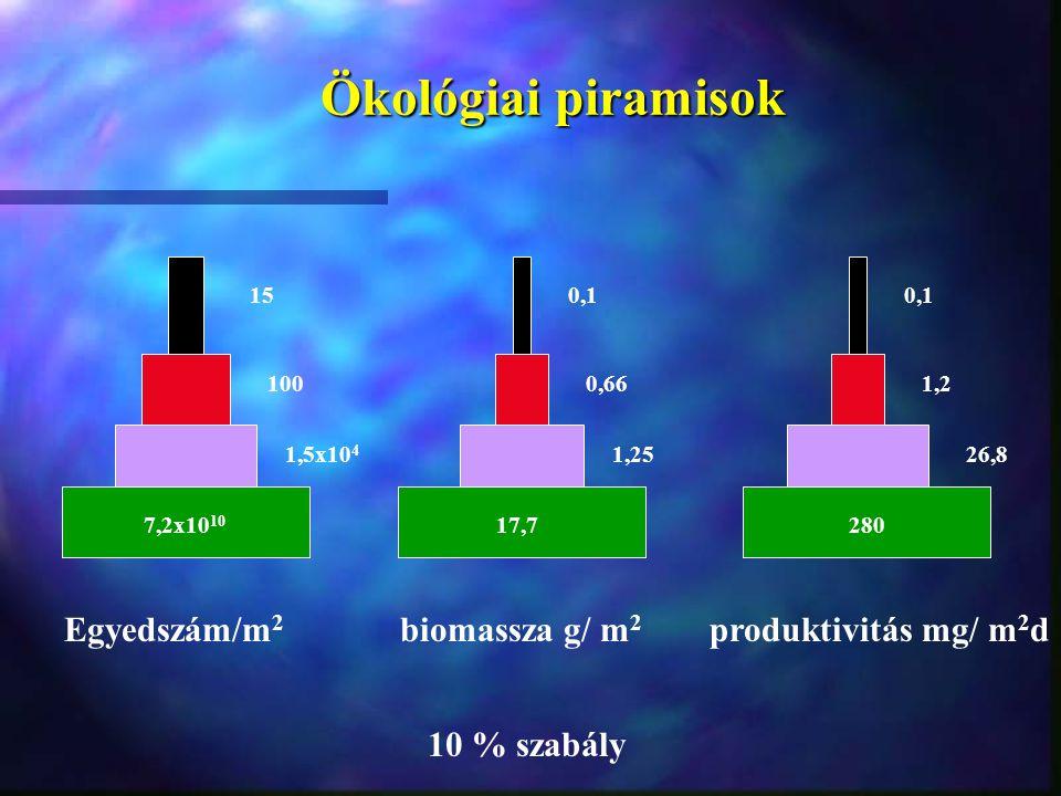 Ökológiai piramisok Egyedszám/m2 biomassza g/ m2 produktivitás mg/ m2d