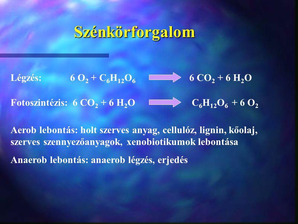 Szénkörforgalom Légzés: 6 O2 + C6H12O6 6 CO2 + 6 H2O