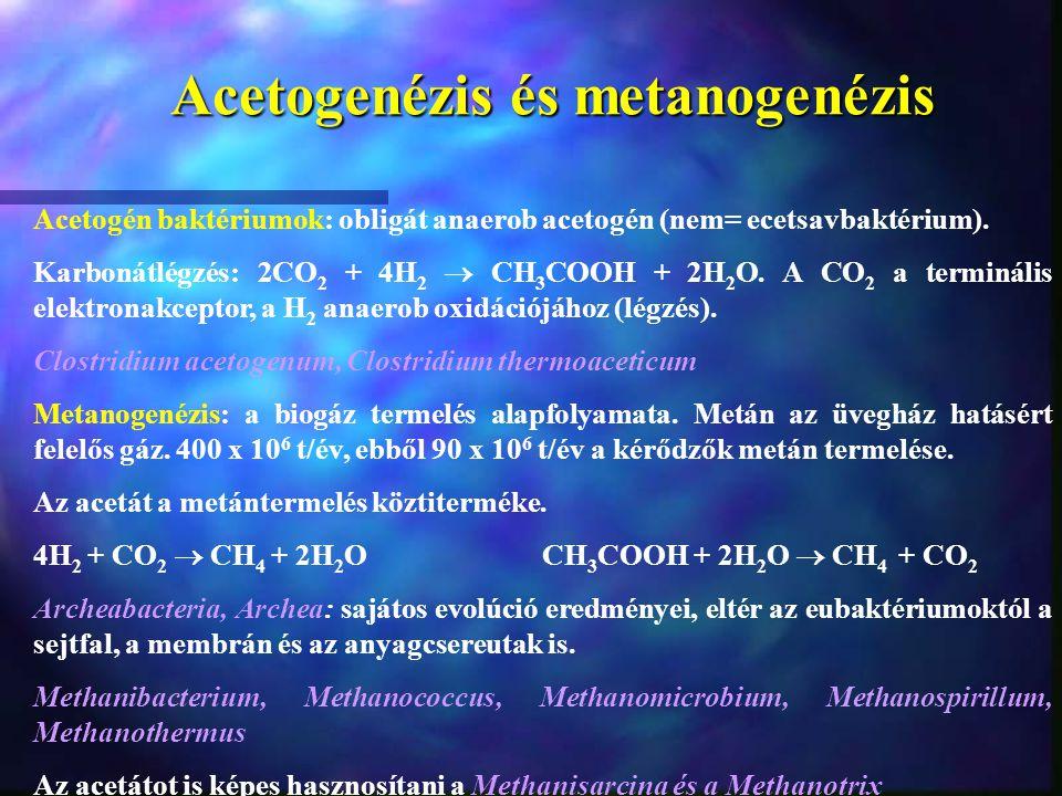 Acetogenézis és metanogenézis