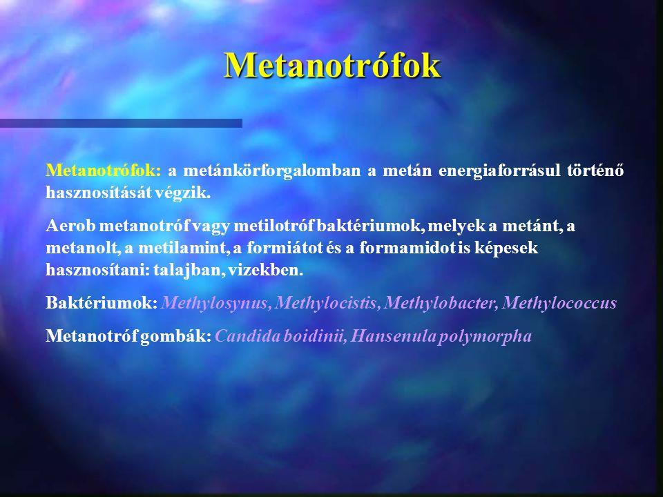 Metanotrófok Metanotrófok: a metánkörforgalomban a metán energiaforrásul történő hasznosítását végzik.
