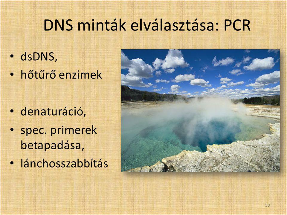 DNS minták elválasztása: PCR