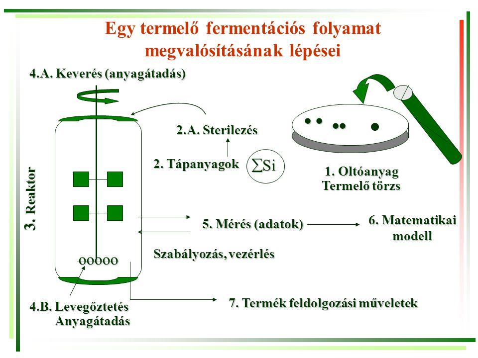 Egy termelő fermentációs folyamat megvalósításának lépései