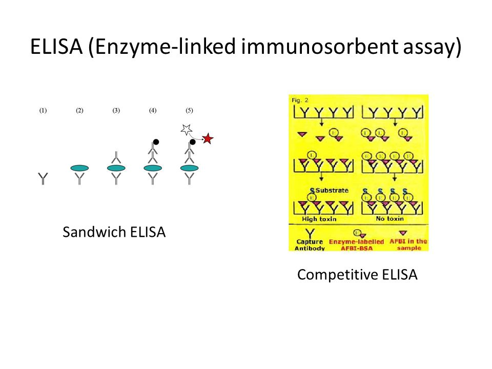 ELISA (Enzyme-linked immunosorbent assay)