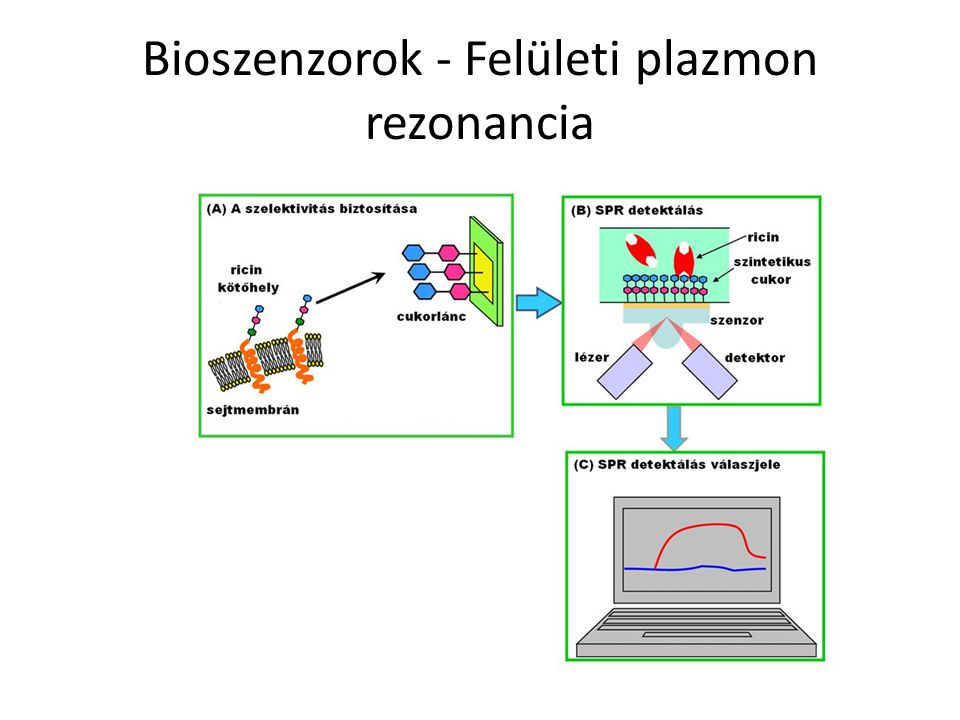 Bioszenzorok - Felületi plazmon rezonancia
