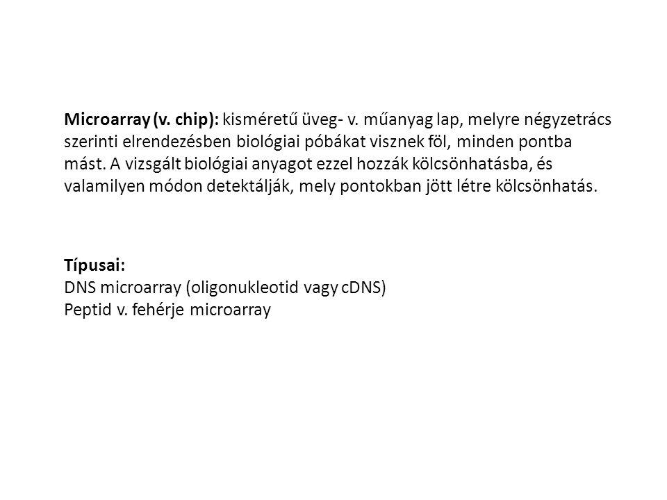 Microarray (v. chip): kisméretű üveg- v