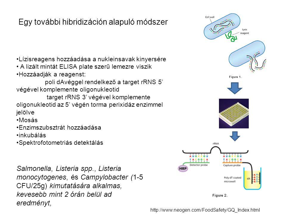 Egy további hibridizáción alapuló módszer