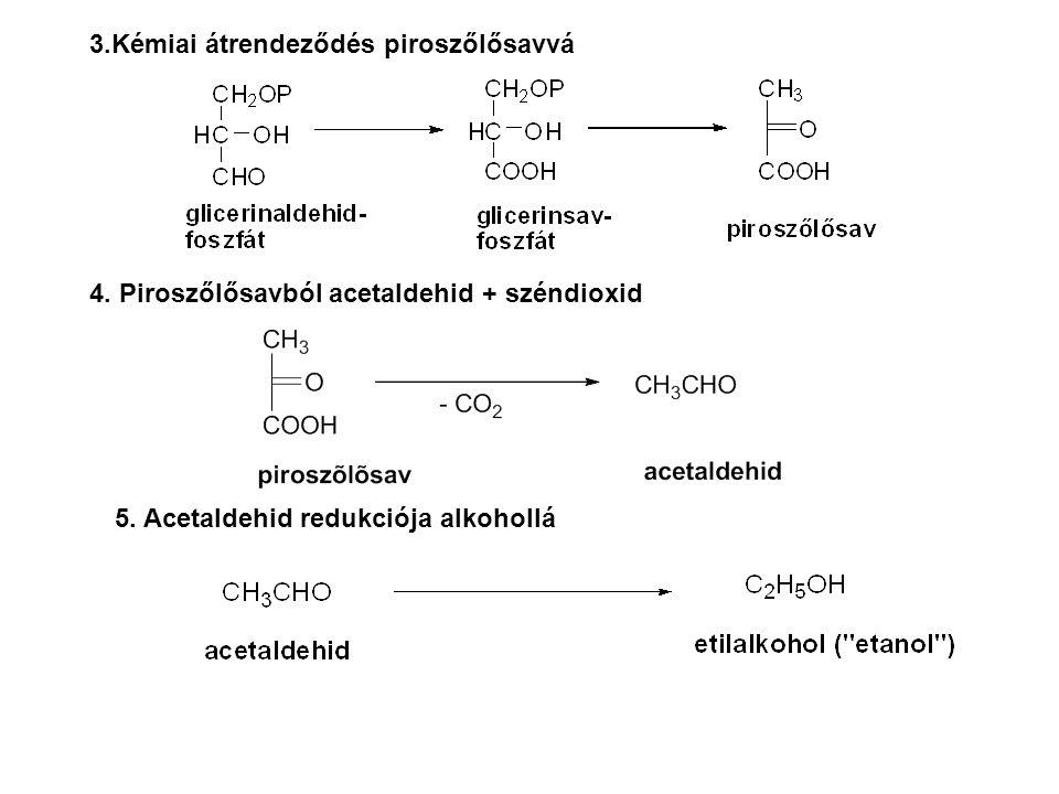 3.Kémiai átrendeződés piroszőlősavvá