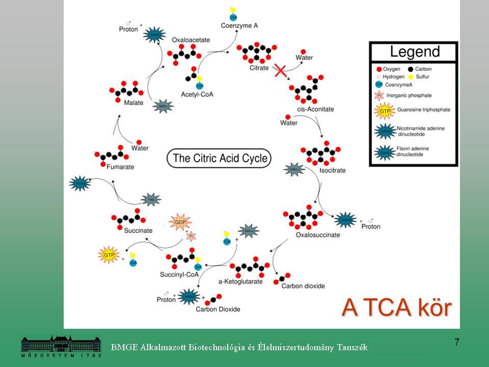 A TCA kör
