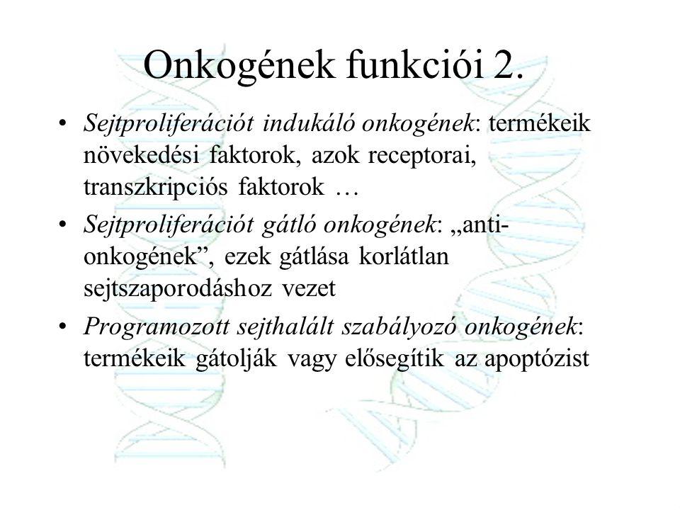 Onkogének funkciói 2. Sejtproliferációt indukáló onkogének: termékeik növekedési faktorok, azok receptorai, transzkripciós faktorok …