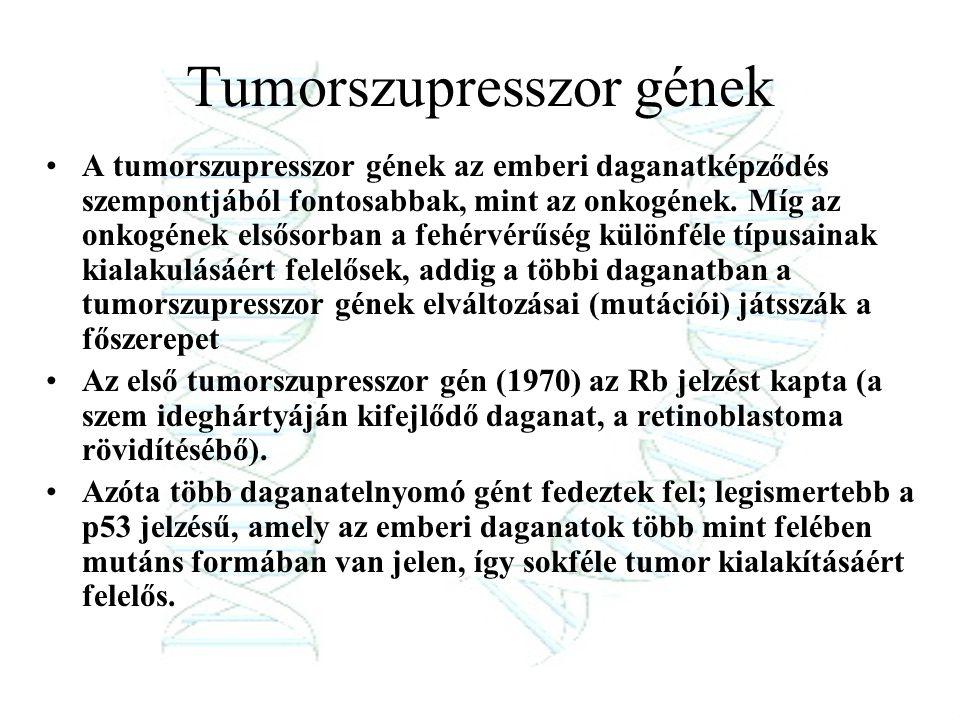 Tumorszupresszor gének