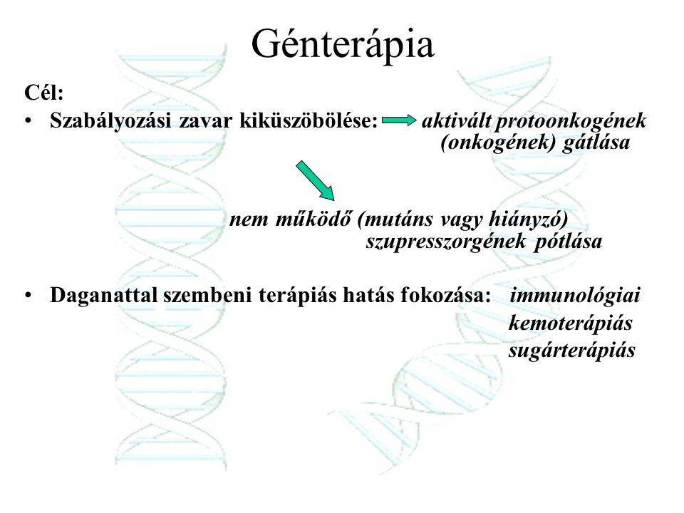 Génterápia Cél: Szabályozási zavar kiküszöbölése: aktivált protoonkogének (onkogének) gátlása.