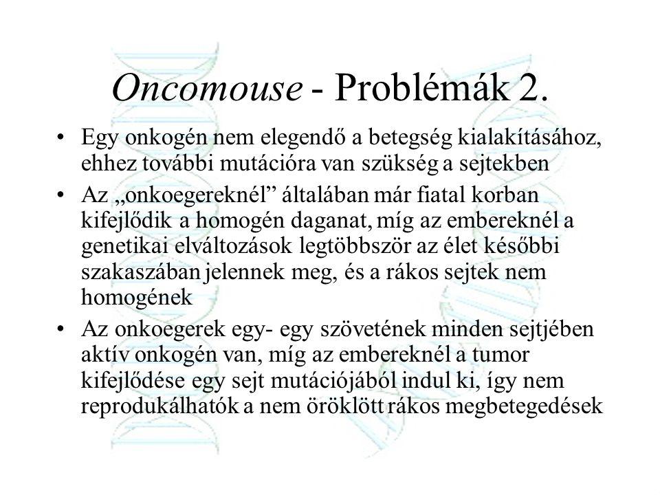Oncomouse - Problémák 2. Egy onkogén nem elegendő a betegség kialakításához, ehhez további mutációra van szükség a sejtekben.
