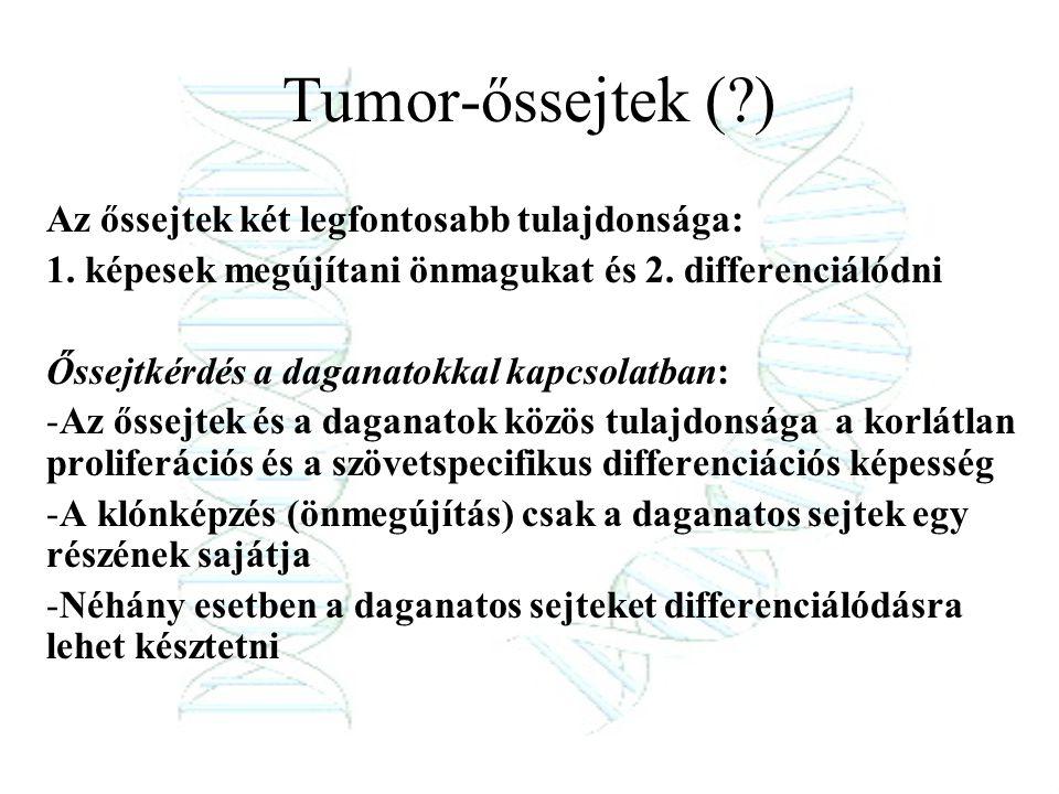 Tumor-őssejtek ( ) Az őssejtek két legfontosabb tulajdonsága: