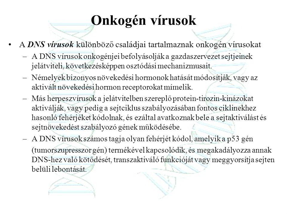 Onkogén vírusok A DNS vírusok különböző családjai tartalmaznak onkogén vírusokat.