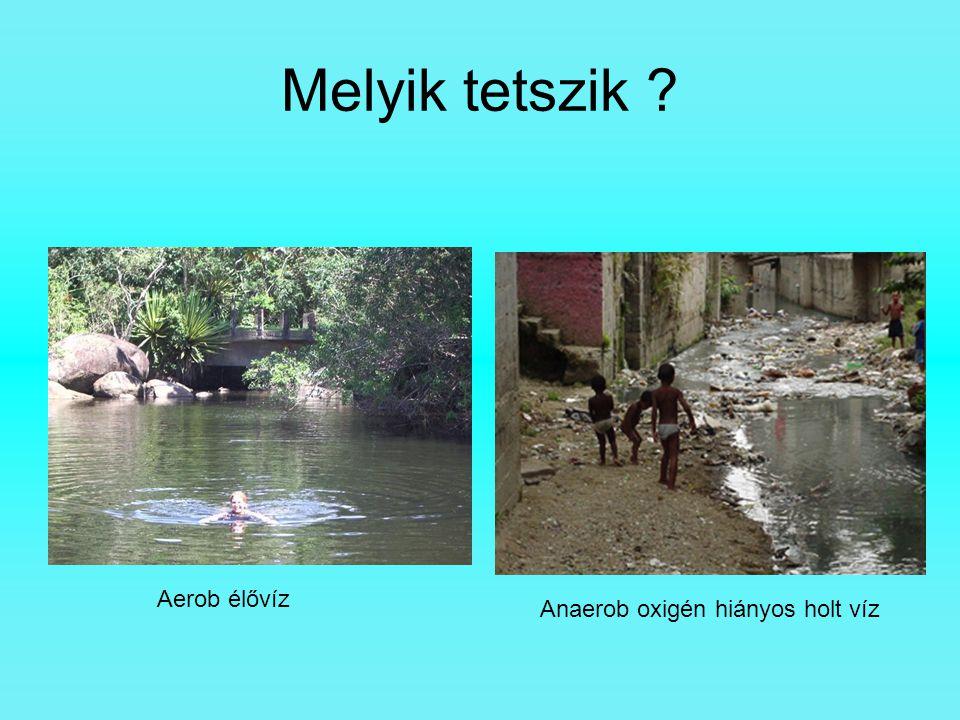 Melyik tetszik Aerob élővíz Anaerob oxigén hiányos holt víz