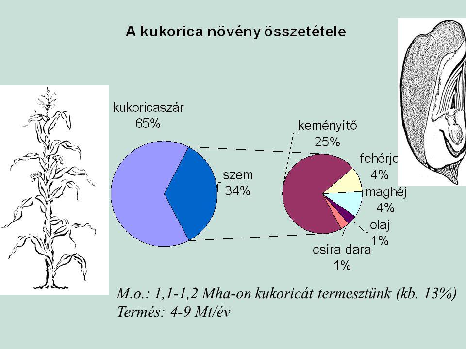 M.o.: 1,1-1,2 Mha-on kukoricát termesztünk (kb. 13%) Termés: 4-9 Mt/év