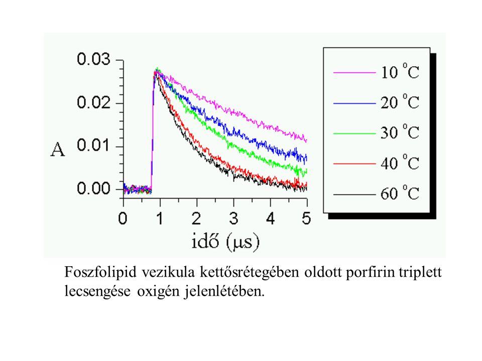Foszfolipid vezikula kettősrétegében oldott porfirin triplett