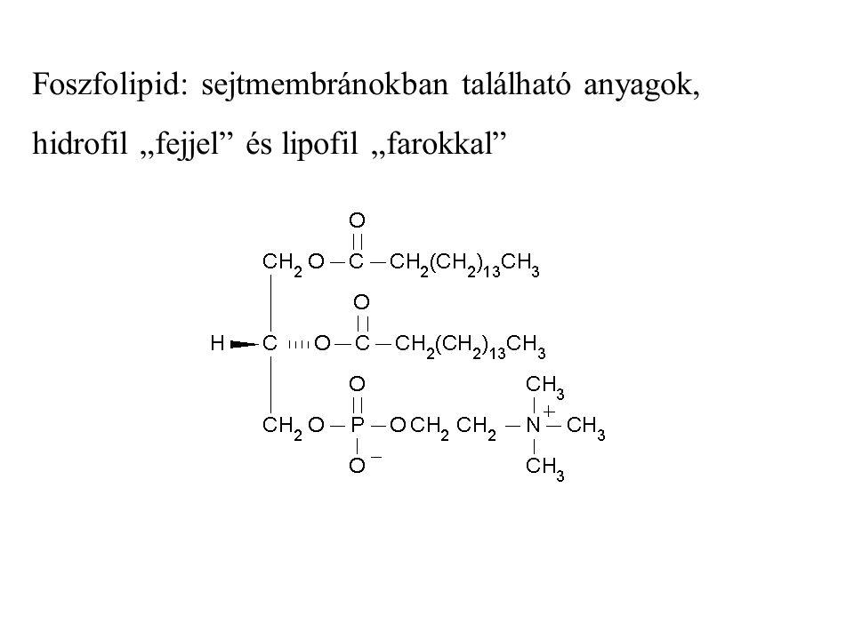 Foszfolipid: sejtmembránokban található anyagok,
