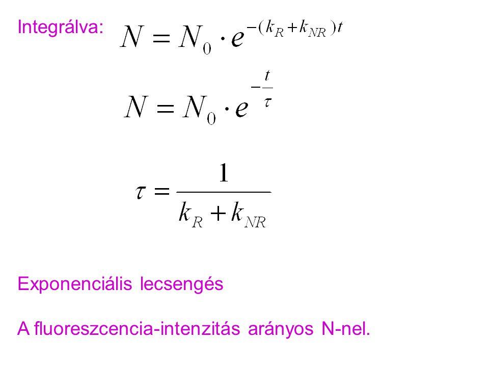 Integrálva: Exponenciális lecsengés A fluoreszcencia-intenzitás arányos N-nel.