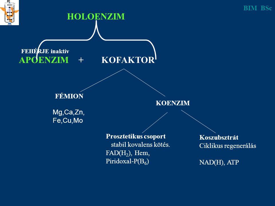 HOLOENZIM APOENZIM + KOFAKTOR BIM BSc FÉMION KOENZIM Mg,Ca,Zn,