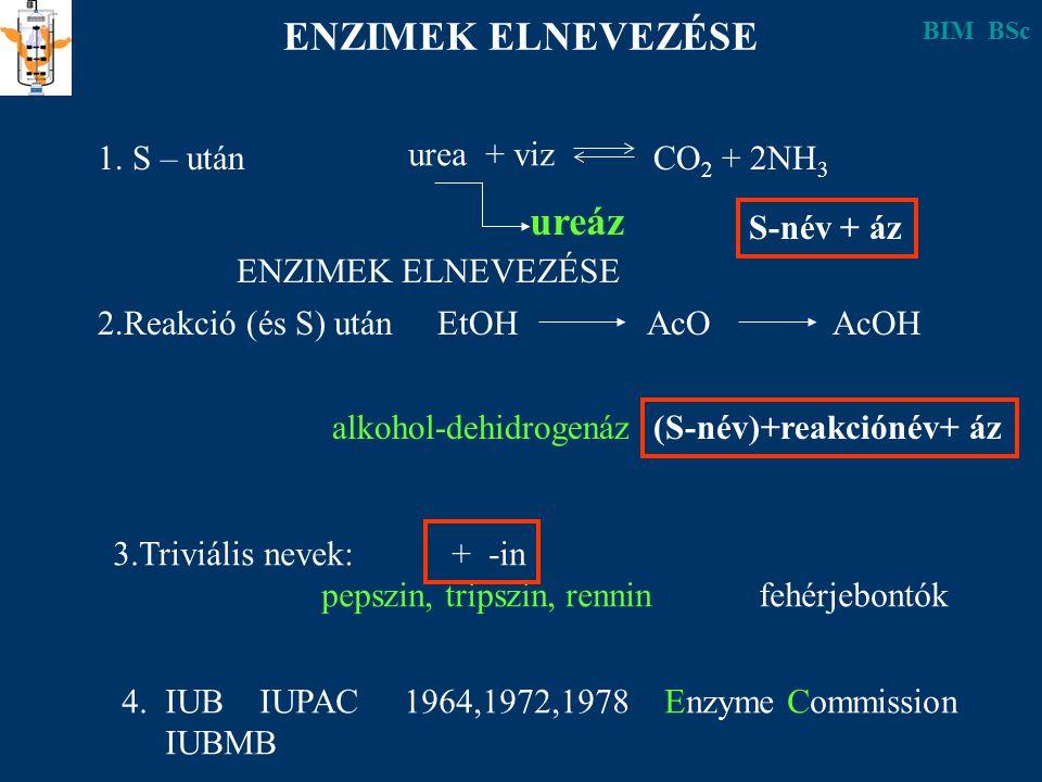 ENZIMEK ELNEVEZÉSE ureáz 1. S – után urea + viz CO2 + 2NH3 S-név + áz