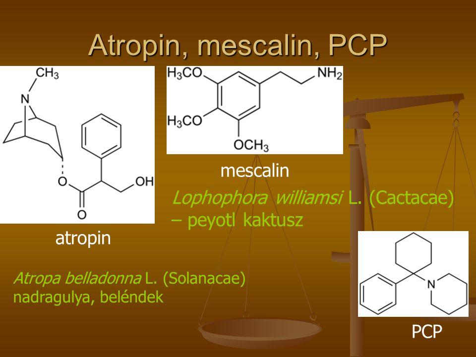 Atropin, mescalin, PCP mescalin Lophophora williamsi L. (Cactacae)