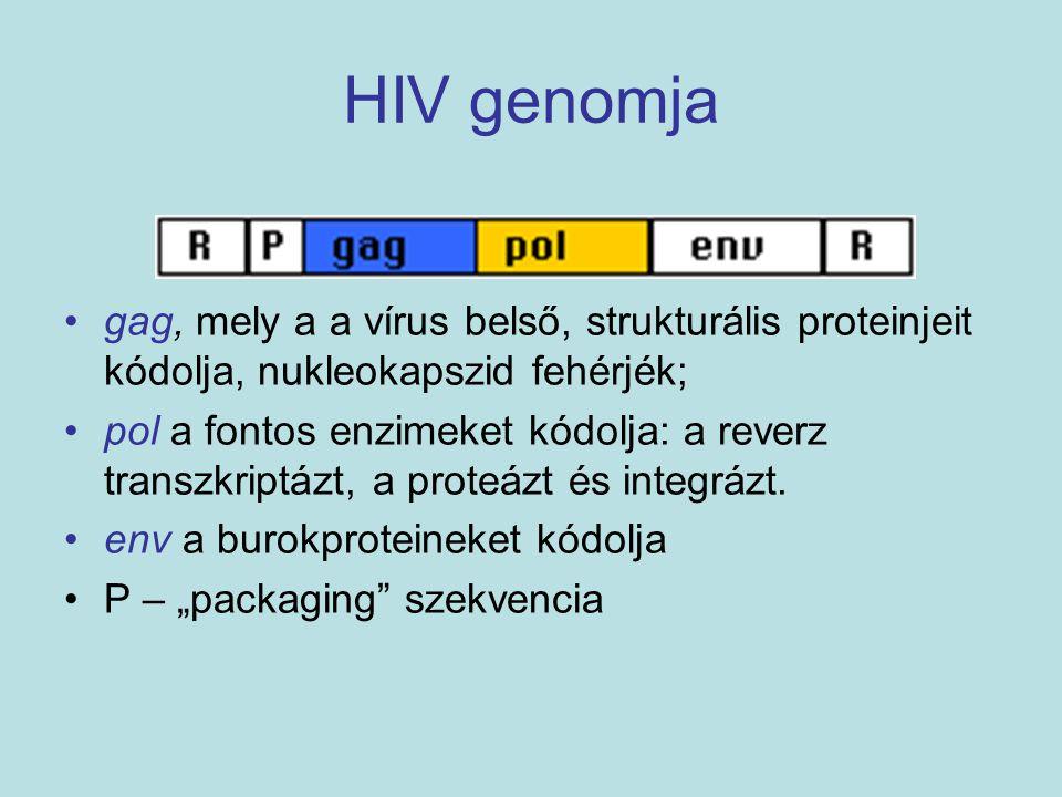 HIV genomja gag, mely a a vírus belső, strukturális proteinjeit kódolja, nukleokapszid fehérjék;