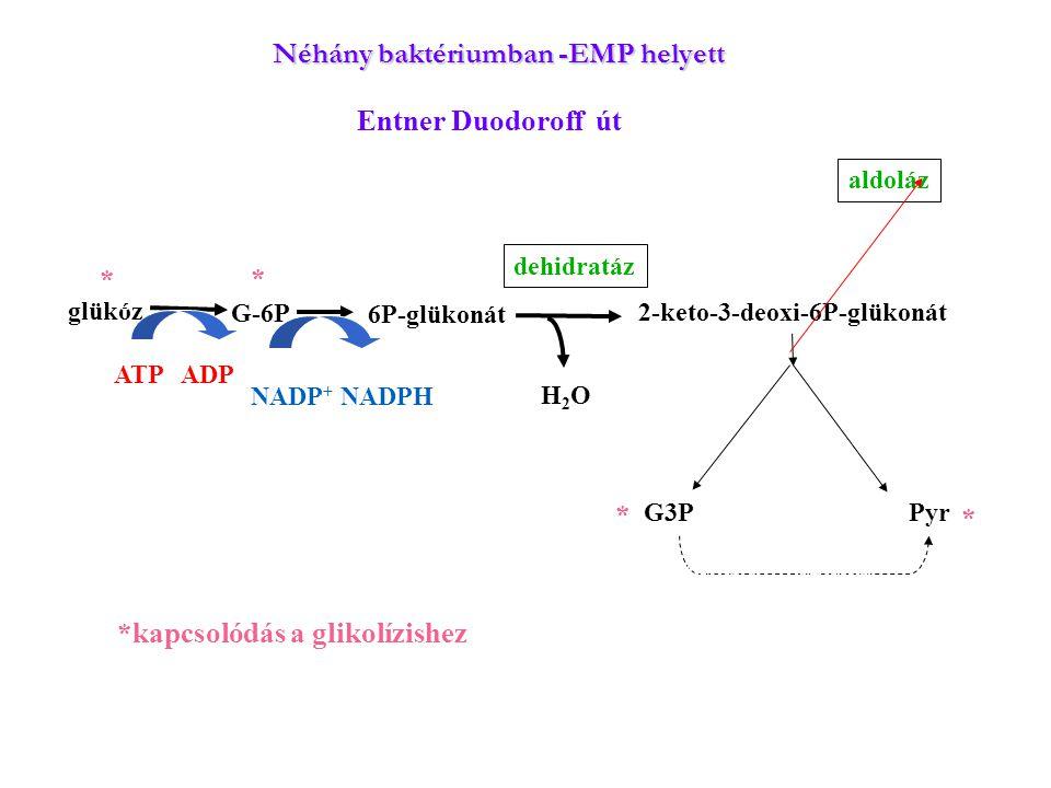 Néhány baktériumban -EMP helyett
