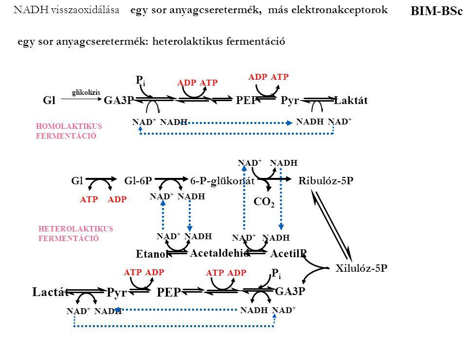 NADH visszaoxidálása egy sor anyagcseretermék, más elektronakceptorok
