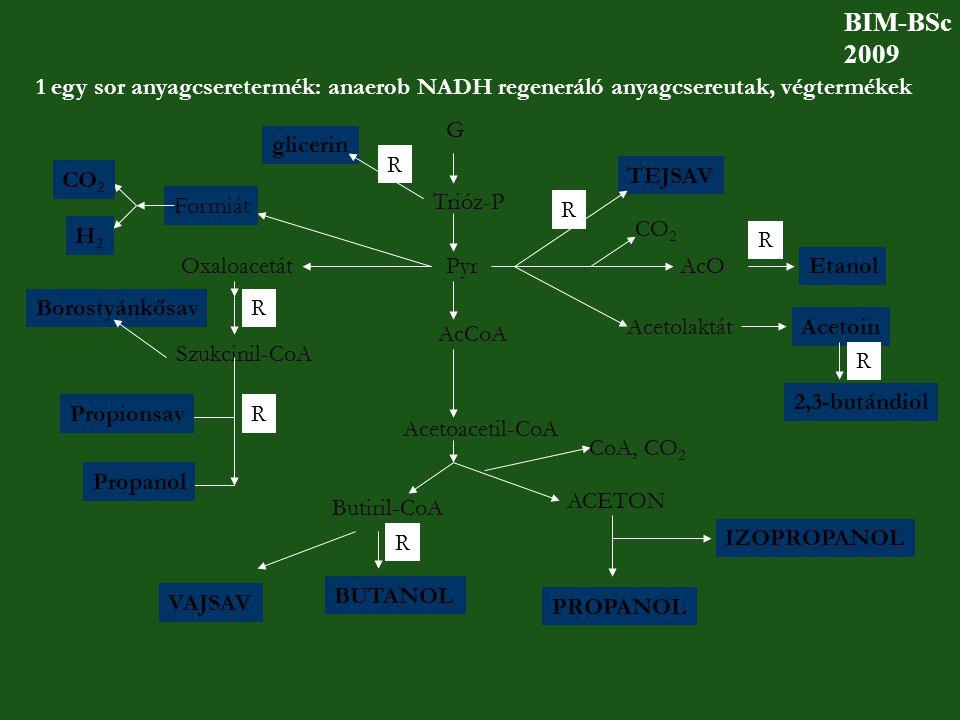 BIM-BSc 2009. 1 egy sor anyagcseretermék: anaerob NADH regeneráló anyagcsereutak, végtermékek. G.